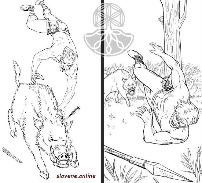 boar fight